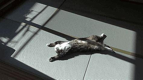le canapé gif sur yvette allongé petit photos de chats
