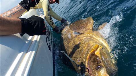 grouper goliath fishing florida vs beast