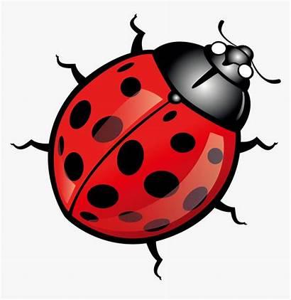 Ladybug Clip Clipart Insect Transparent Kindpng
