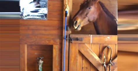 horse tantrum horses littlethings during zero named
