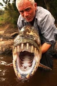 Teru Teru Botzu's Weblog: Ikan Piranha Raksasa Sungai Kongo
