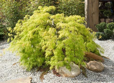 Anspruchslose Garten Pflanzen by Zen Garten 187 Diese Pflanzen Geh 246 Ren Hierher