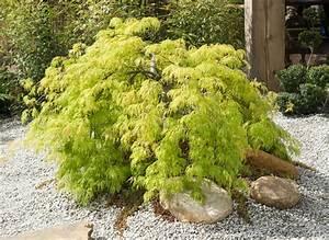 Garten Pflanzen : zen garten diese pflanzen geh ren hierher ~ Eleganceandgraceweddings.com Haus und Dekorationen