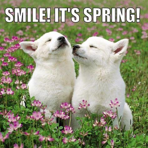 Smile Its Spring Dogs Spring Smile Dog Smiles