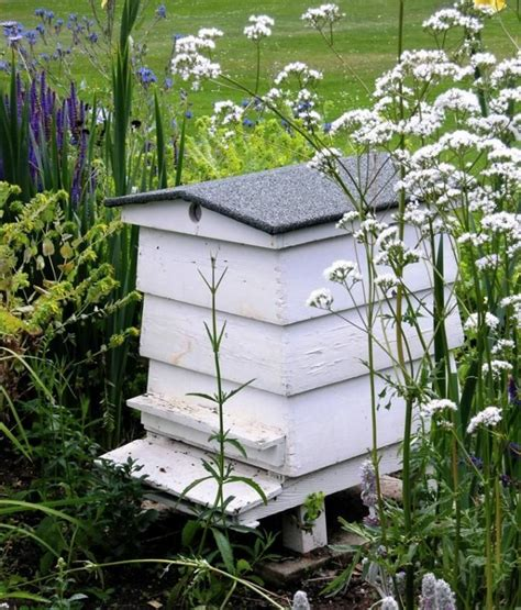 backyard honey bee hive 1000 images about bees on beekeeping for