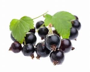 Schwarze Johannisbeere Pflanzen : schwarze johannisbeere ribes nigrum vorsicht gesund ~ Frokenaadalensverden.com Haus und Dekorationen