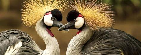 uccelli non volanti gli uccelli hanno emozioni animali volanti