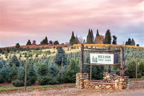 christmas tree farms in sacramento hillside tree farm apple hill ca el dorado county apple hill california el dorado