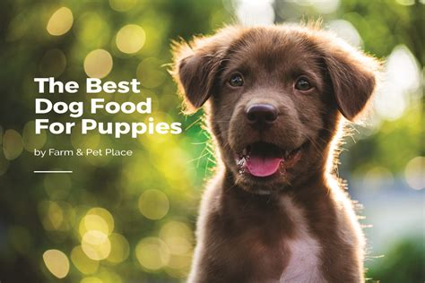 dog food  puppies  guide  puppy food