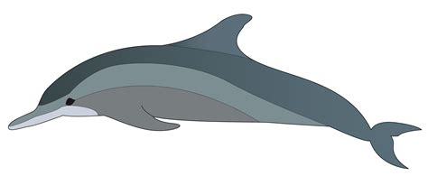 Dolphin Clipart Dolphin Clip Images Black And White