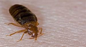 bed bug removal treatment for bed bugs in new england With bed bug be gone