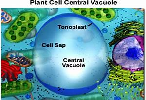 Sonu Academy  Plant Cell