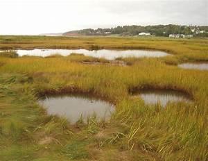 Saltwater Wetlands