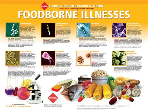 foodborne illnesses poster