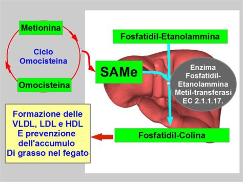 alimentazione fegato grasso omocisteina alta e fegato grasso alimentazione e