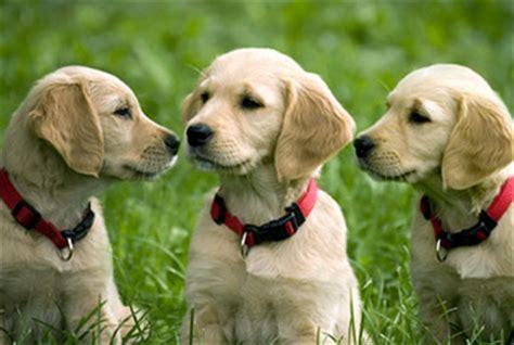 national dog day aug