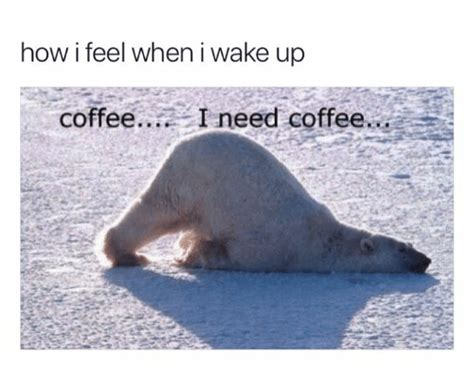 25+ Best Memes About I Need Coffee Best Instant Decaf Coffee 2018 Decaffeinated Mr Maker Bpa Free For Sale Homemade Beans No Grinder Accessories Walmart Australia