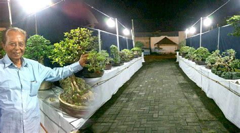 hajatan gelar pameran bonsai diikuti ratusan
