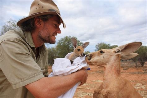 australian hero  surrogate mom  orphaned baby kangaroos
