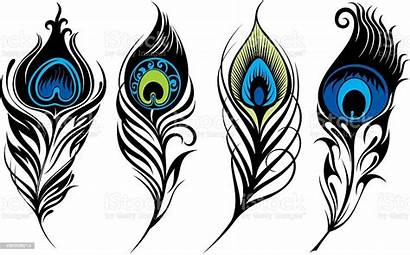Peacock Feathers Vector Feather Stylized Symbol Meaning