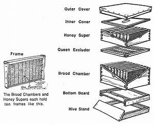 Beehive Diagram