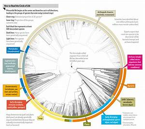All 2 3 Million Species Are Mapped Into A Single Circle Of
