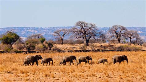 day kenya  tanzania safari kenya  tanzania safaris