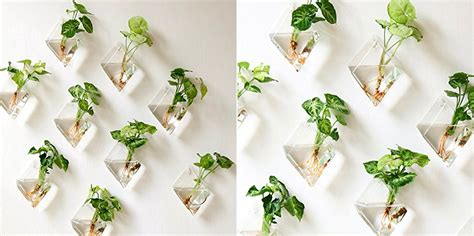 Product Of The Week Wall Hanging Glass Planters by Product Of The Week Wall Hanging Glass Planters