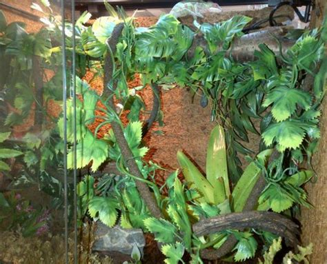 reptile supplies for a tropical terrarium swell reptiles