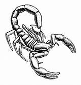 Scorpion Drawing Clipart Tribal Pencil Draw Easy Outline Sketch Drawings Realistic Scorpions Coloring Pages Clip Cliparts Mortal Kombat Drawn Designs sketch template