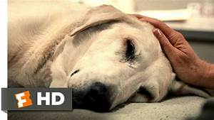 Marley & Me (5/5) Movie CLIP - You're a Great Dog, Marley ...
