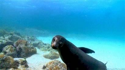 Gifs Marine Ocean Seal Animals Sea Animal