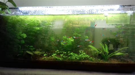 l aquarium naturel plant 233 pour les nuls page 3