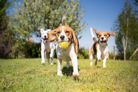 unleashed grooming amp doggie daycare bismarck nd seize 328 | DogsPlayingRESIZED