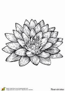 Dessin Fleurs De Lotus : coloriage fleur de lotus encre de chine sur ~ Dode.kayakingforconservation.com Idées de Décoration