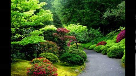 gambar pemandangan alam terindah  dunia hutan hijau
