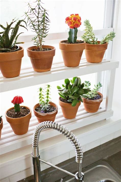 Sill Plants by 1000 Ideas About Kitchen Window Sill On