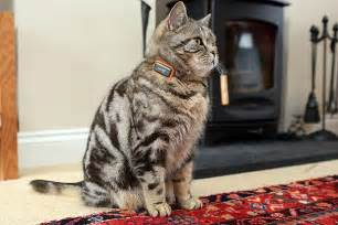 cat gps cat lucky gps cat tracking collars can be to find