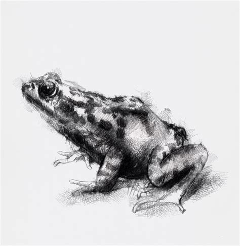 One Of My Sketch A Day Drawings Spring Frog Drawing Frog