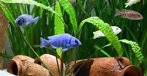 Trommelfilter Selber Bauen : trommelfilter f rs aquarium selber bauen aquaristik ~ Orissabook.com Haus und Dekorationen