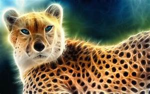Cool Animal Backgrounds Light