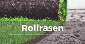 Rollrasen Verlegen Video : rollrasen fertigrasen verlegen garten schule ~ Orissabook.com Haus und Dekorationen