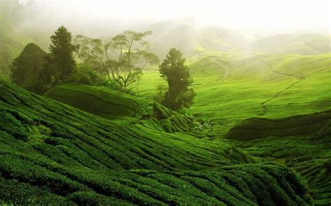 Forest, Path, Tea, Hd Background Images, China, Hills
