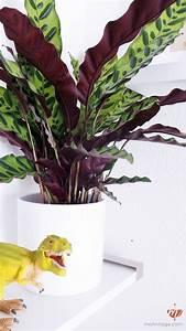 Welche Pflanzen Sind Nicht Giftig Für Katzen : ungiftige pflanzen f r katzen mehr urban jungle f r die katz 39 mohntage handmade kultur ~ Eleganceandgraceweddings.com Haus und Dekorationen