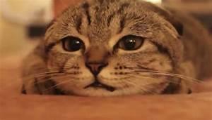 Sad Cat Diary By Ze Frank  Video