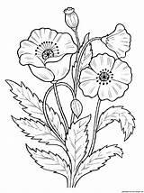 Poppy sketch template