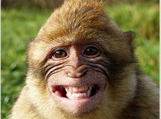 Are humans like monkeys? MRI scanning suggests