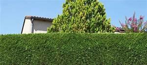Quoi Planter En Automne : quand planter thuya ~ Melissatoandfro.com Idées de Décoration