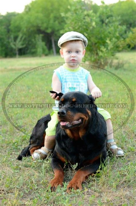 pin  fordogtrainerscom  kids  dogs rottweiler
