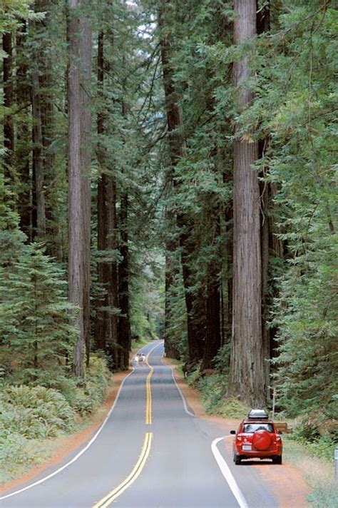 Avenue of the Giants Humboldt County California